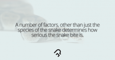 Dealing With Snake Bites