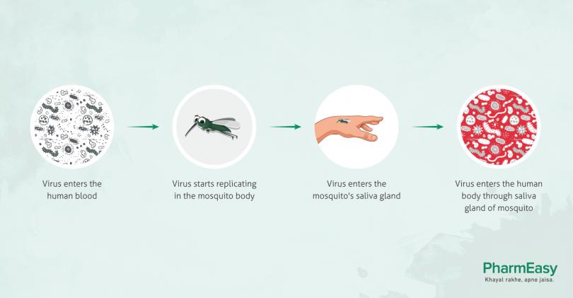Chickungunya virus symptoms