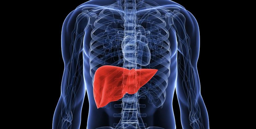 Stressed liver