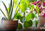 5 Best Indoor Plants For Your Home! - PharmEasy