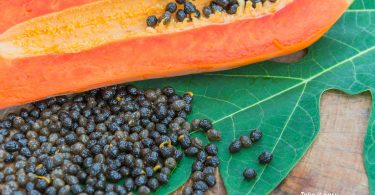 Papaya Seeds on leaf
